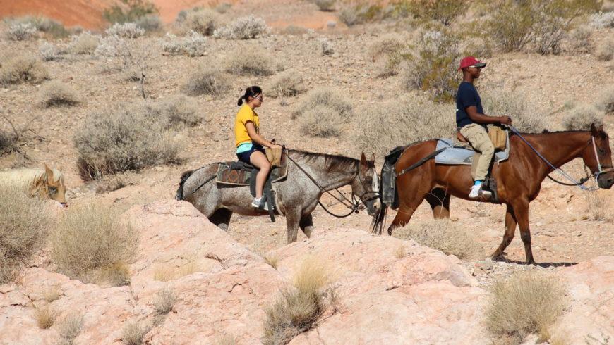 Synthetic Horseshoes Reduce Impact